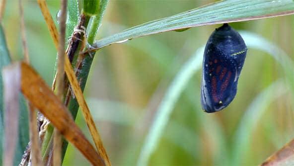 Cómo atraer a las mariposas a su jardín