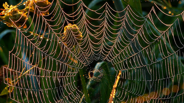 Just because everyone else has dew covered spiderwebs doesn't mean you can't film them!