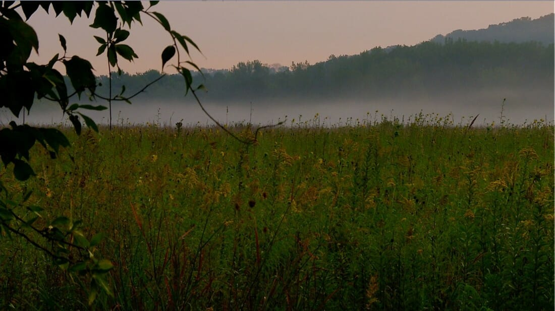 Iowa tallgrass prairie