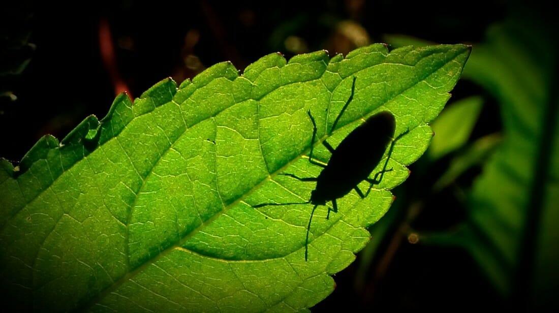 a bug crawls on a leaf