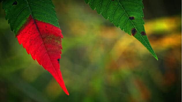 Leaf_630