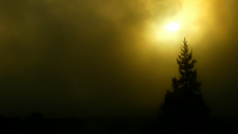Yellowstone_Fog